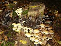 Fungi community