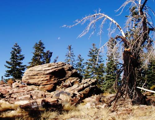 Interesting rocks, moon, and burned tree