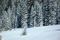 White coat for trees