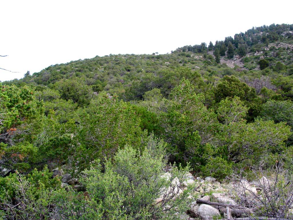 Bushwhacking on Southwest Ridge