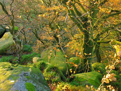Boulders and trees at Rowtor Rocks