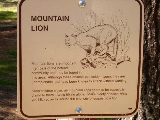 mountain loin warning...
