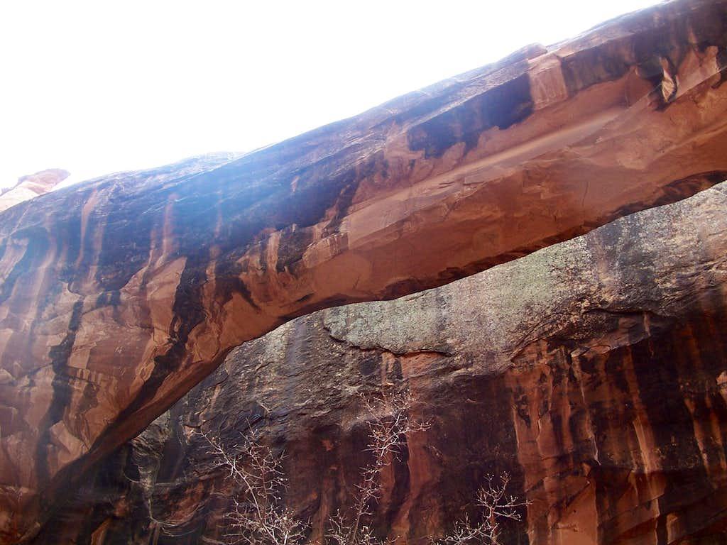 Morning Glory Arch