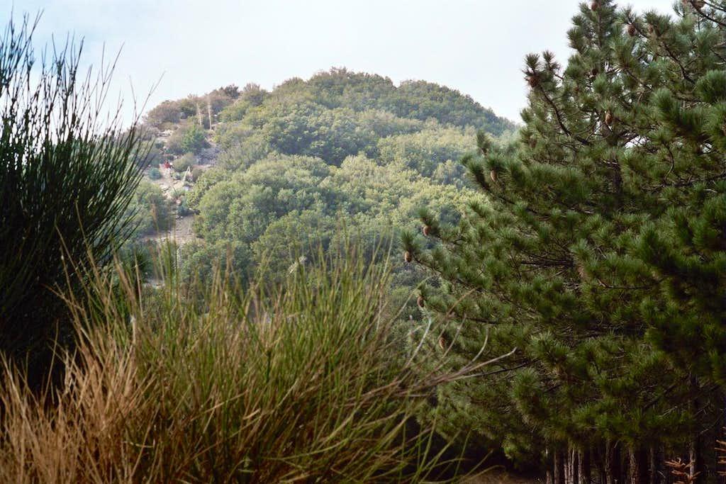 Firebreak Route Along East Ridge of Mt. Deception