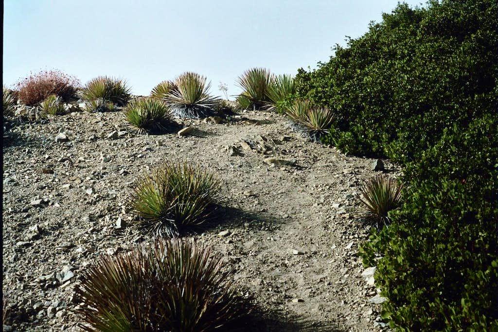 Near Summit of Mt. Deception, San Gabriel Mountains