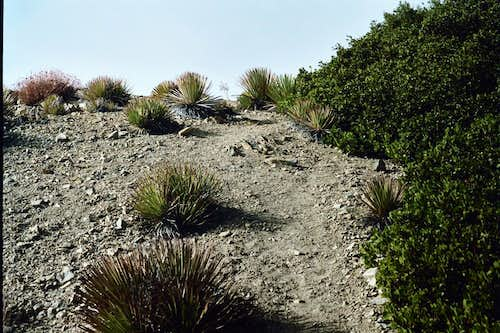Near Summit of Mt. Deception, San Gabriel Mountains