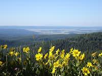 Wildflowers of Yellowstone