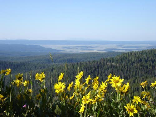Wildflowers of Yellowstone