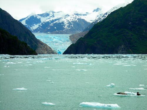 Seals and the South Sawyer Glacier