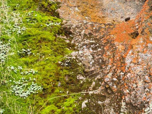 Moss & Lichen Close Up
