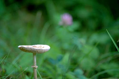 Spring Mushroom