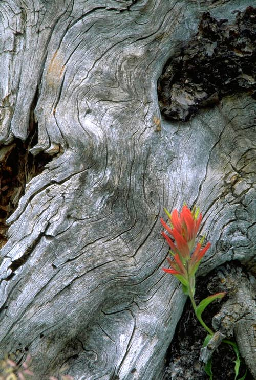 Tree Root and Paintbrush