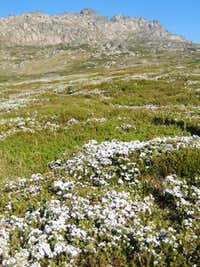 Wildflowers and Granite outcrops