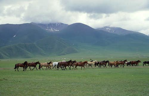 Horses in the main valley