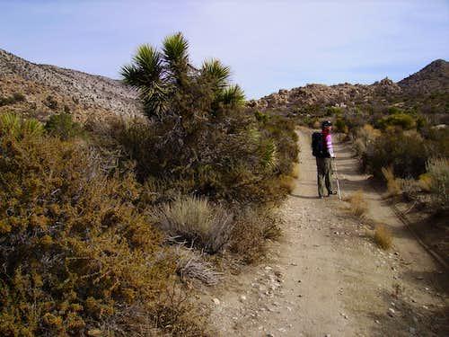 Cactus Flats