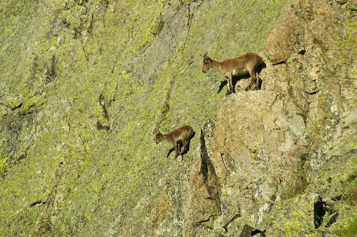 Ibex Rock Climbing Gredos Ibex Rock Climbing