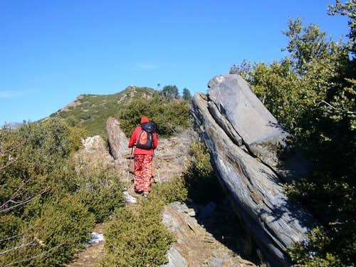 Fobes Saddle Trail