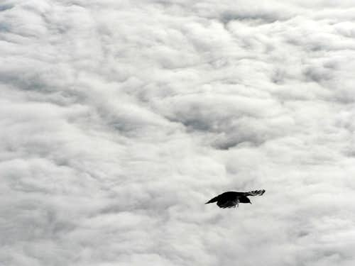 Daw above the clouds...