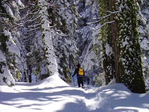Snowshoeing out to Tokopah Falls