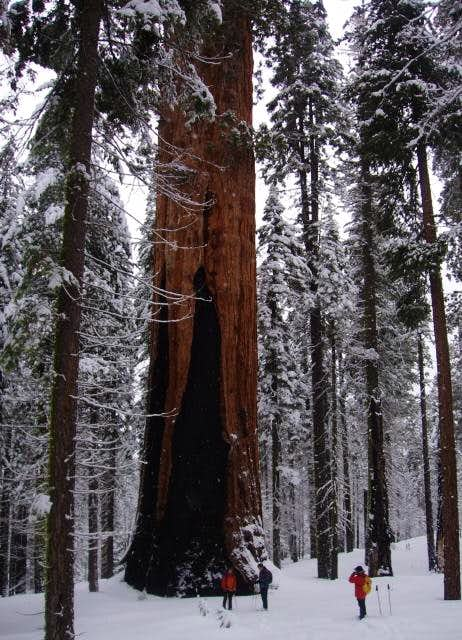 Snowshoeing to the Franklin Tree
