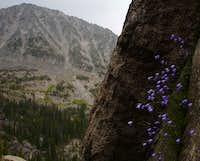 Big Timber Canyon