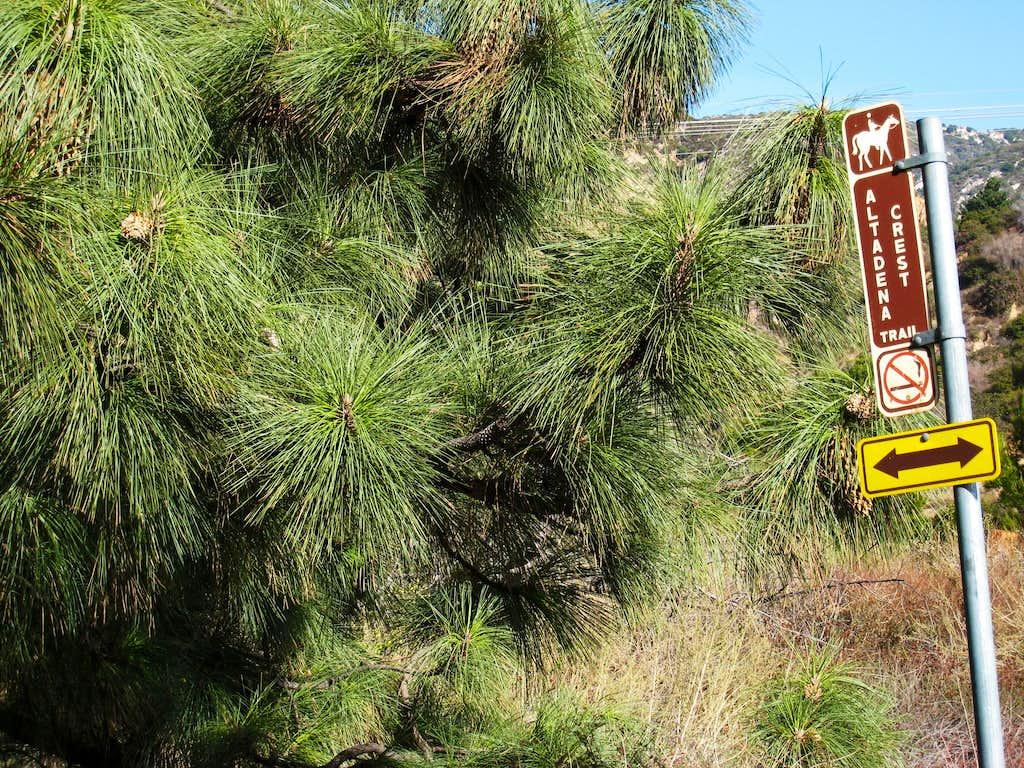 Altadena Crest Trail, San Gabriel Mountains