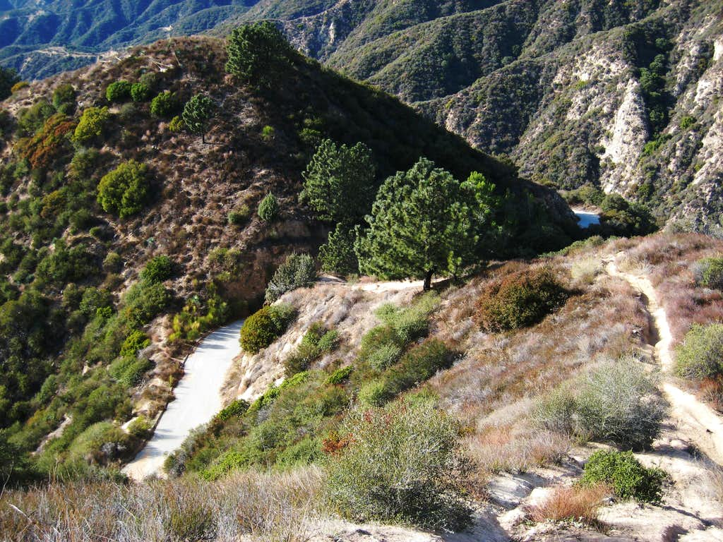 Mt. Lowe Fire Road (L) and Sunset Ridge Trail (R) Below Sierra Saddle