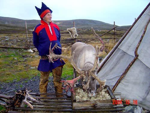 Reindeer and a Norwegian