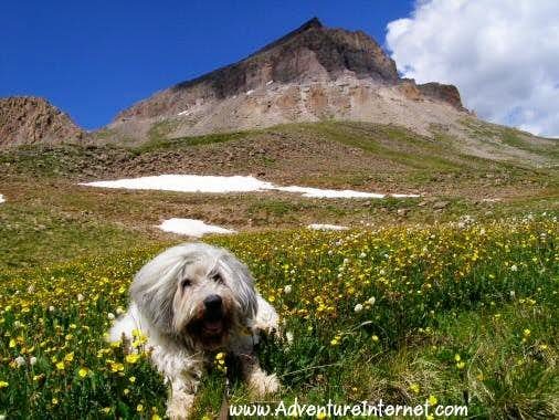 Relaxing in the Alpine Meadow