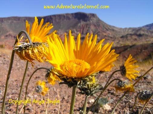 Lake Mead Sunrays