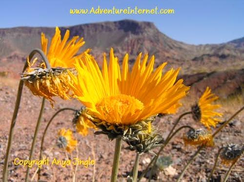 Flora of Lake Mead