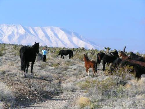 With Wild Horses of Cold Creek