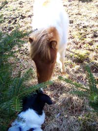 Apparently, Dogs and Ponies Get Along