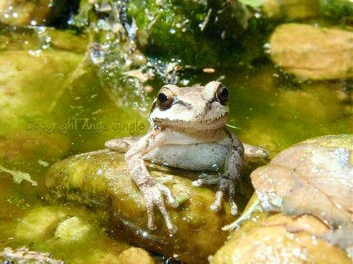 Frog below Dark Shadows