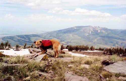 Blondie on the summit of Mt....
