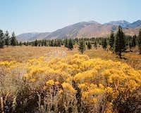 Meadow near the Eastern Sierra Escarpment