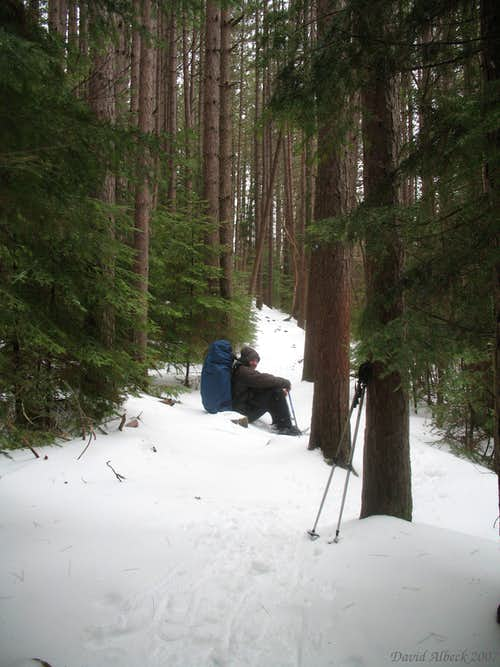 Resting in the Pines