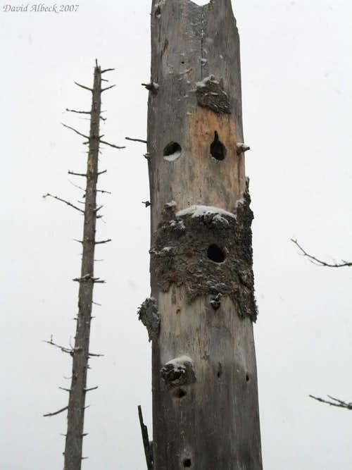 Woodpeckers were here