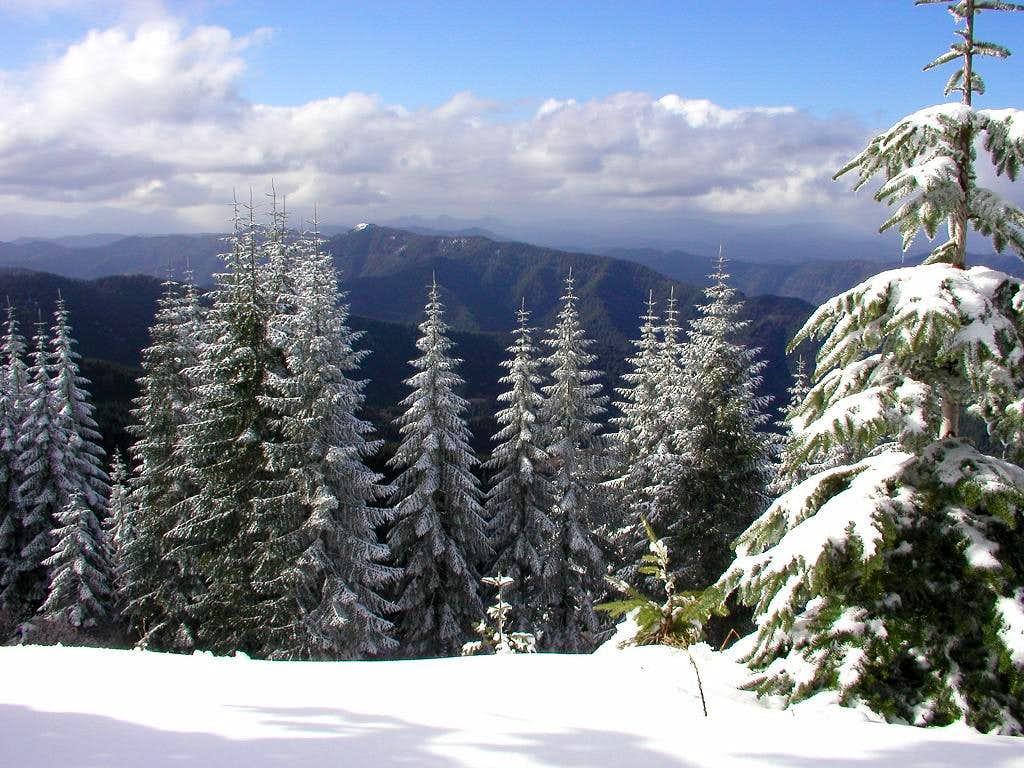 Fresh snow near the summit of Rogers Peak