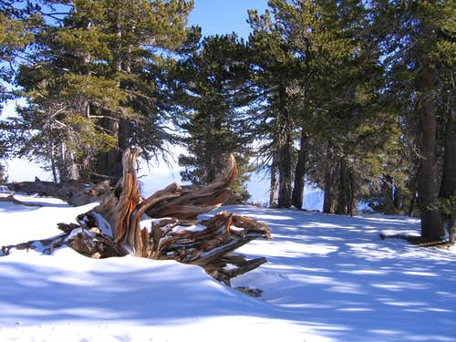 San Jacinto Peak in ice and snow