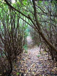 Panthertown trail.