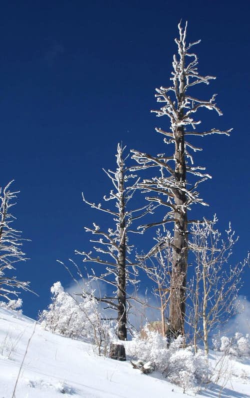 Near the summit of Elden in winter