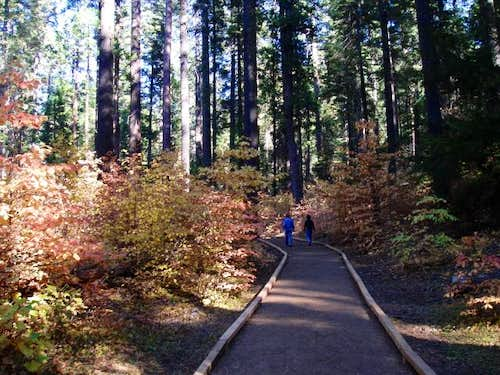 Walking amongst Dogwoods and Sequoias