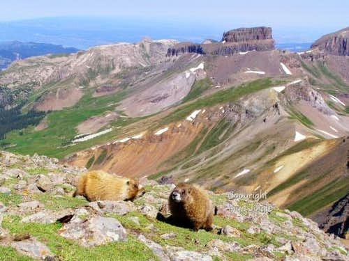 Two Marmots on the summit of Wetterhorn Peak