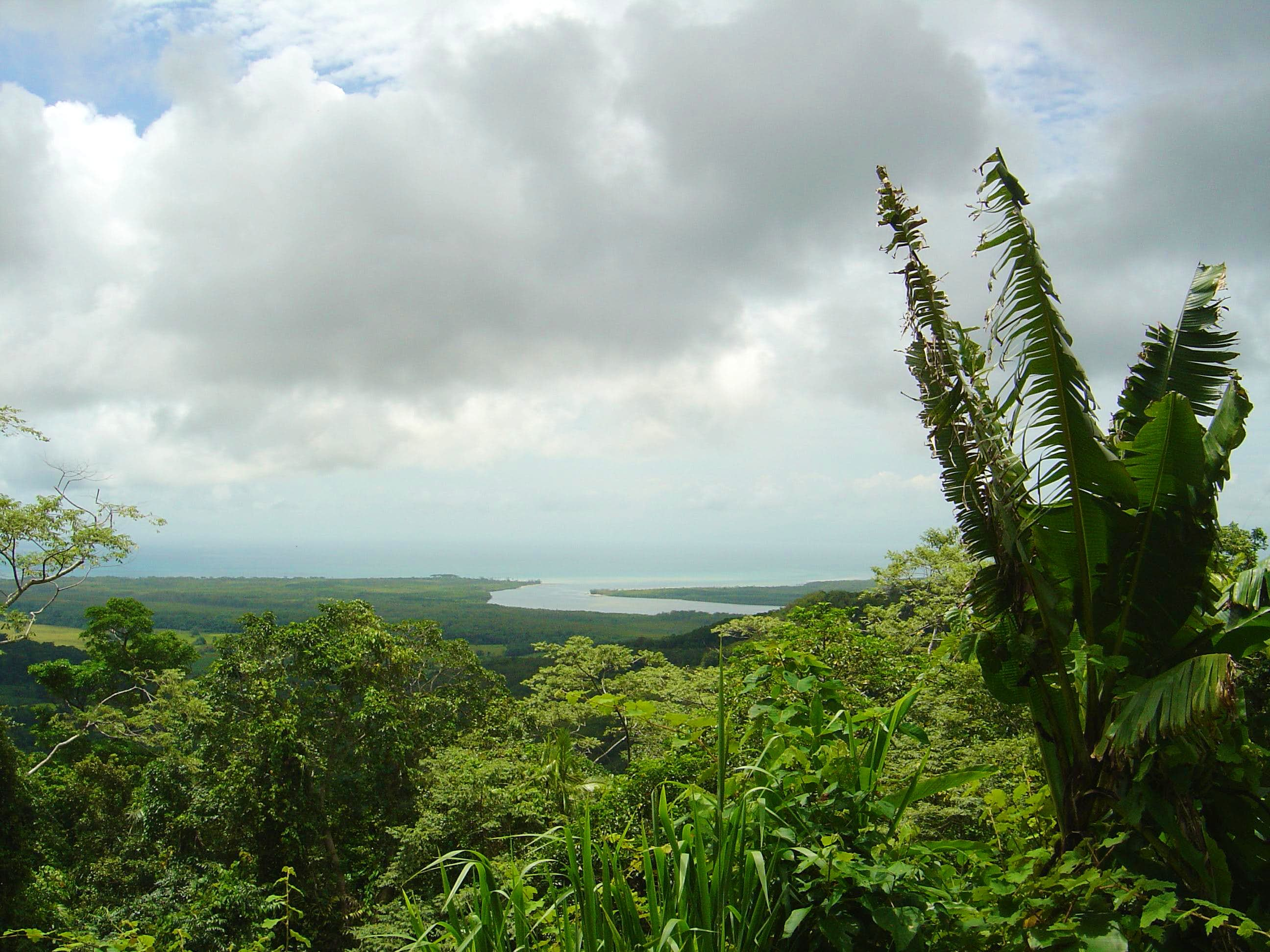 Australia- Daintree National Park