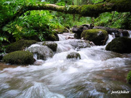 Perucica, Primeval Forest