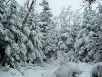 Trail to Blue Mountain
