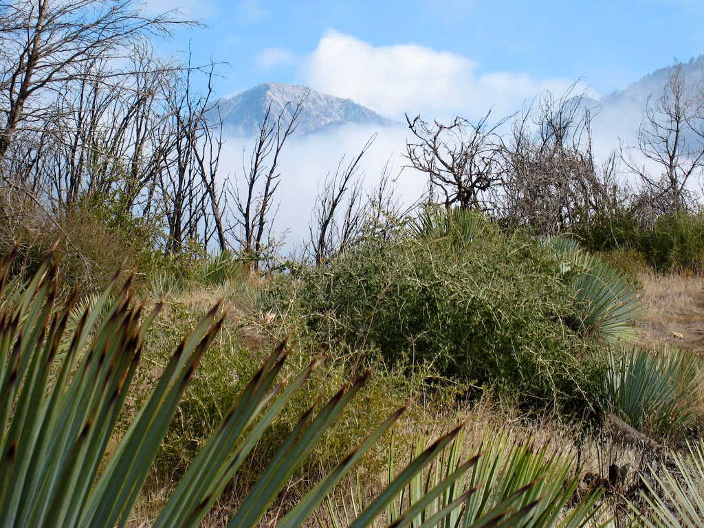 View NE from Sunset Peak's north ridge