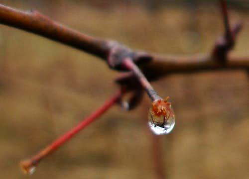 Dew Drop on tree near Grouse Meadow