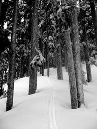 Mount Catherine ski tracks